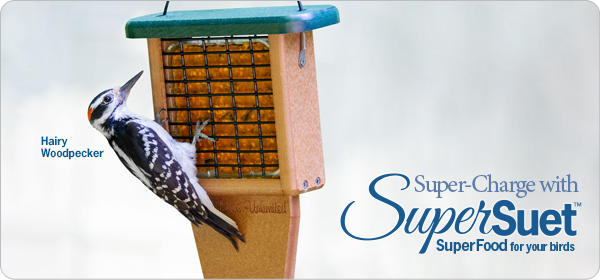 Super-Charge with SuperSuet